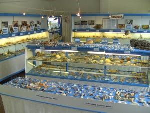 Die Ausstellung im Muschel Museum